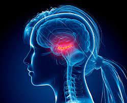 Photo of رسم المخ  EEG
