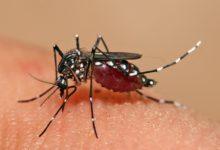Photo of حمى الضنك Dengue fever