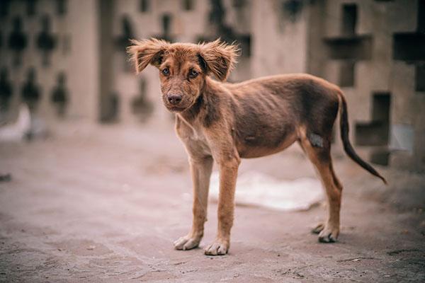 Photo of احذر.. حيوانك الأليف قد ينقل لك السعار