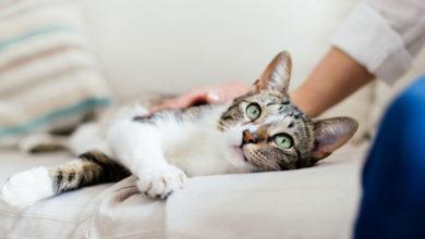 Photo of كيف يتسبب داء القطط بإجهاض الجنين