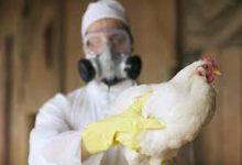 Photo of انفلونزا الطيور..الأعراض وطرق الوقاية منها